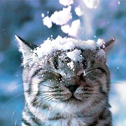 С первым снегом